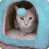 Adopt A Pet :: Charlie - Lawrenceville, GA