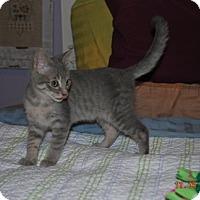 Adopt A Pet :: Dorothy - Bentonville, AR