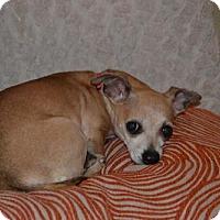 Adopt A Pet :: Nena - Deerfield Beach, FL