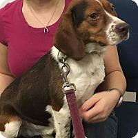 Adopt A Pet :: Jay - cicero, NY