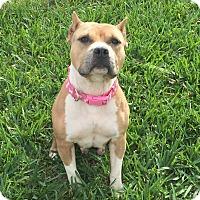 Adopt A Pet :: Misty - Lake Worth, FL