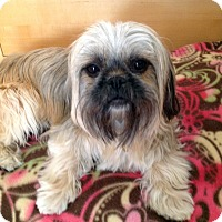 Adopt A Pet :: QUINNIE - Los Angeles, CA