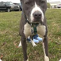 Adopt A Pet :: Bonnie - Memphis, TN