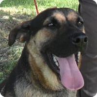 Adopt A Pet :: Bella - Grand Saline, TX