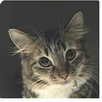 Adopt A Pet :: Paige - Springdale, AR