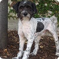 Adopt A Pet :: Dobby - Palo Alto, CA