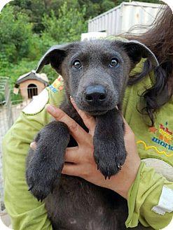 Jindo Mix Dog for adoption in Litchfield Park, Arizona - Smokey