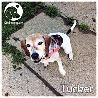 Adopt A Pet :: Tucker - Novi, MI