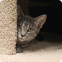 Adopt A Pet :: Sabina - Naperville, IL