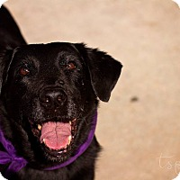 Adopt A Pet :: Kilie - Springfield, MO