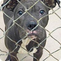 Adopt A Pet :: 47943 Goliath - Zanesville, OH
