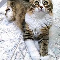 Adopt A Pet :: Daphne - Austintown, OH