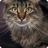 Adopt A Pet :: Disney - Manahawkin, NJ
