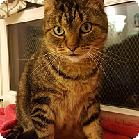 Adopt A Pet :: Amazon - Salisbury, MA