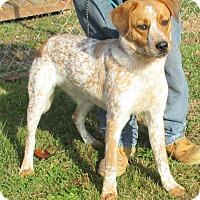 Adopt A Pet :: Clyde - Reeds Spring, MO