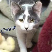 Adopt A Pet :: Charlie - York, PA