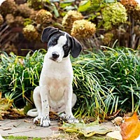 Adopt A Pet :: Lydia Deetz - Pittsburgh, PA