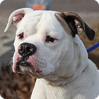 Adopt A Pet :: Rambo - Marietta, OH
