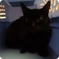 Adopt A Pet :: Juliet - St Augustine, FL