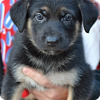 Adopt A Pet :: Bear - Simi Valley, CA