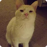 Adopt A Pet :: Aspen - Owatonna, MN