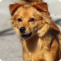 Adopt A Pet :: Walt - Lafayette, IN