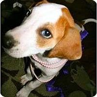 Adopt A Pet :: Spring - Richmond, VA