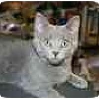 Adopt A Pet :: Lizzy & Sara - Delmont, PA