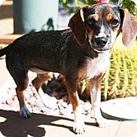 Adopt A Pet :: Anita - Gilbert, AZ