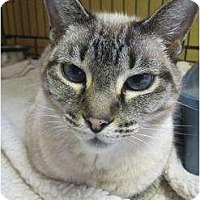 Adopt A Pet :: Kitty-COURTESY POST - Toronto/Etobicoke/GTA, ON