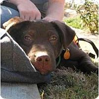 Adopt A Pet :: Cisco - Cumming, GA