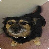 Adopt A Pet :: OTTO - North Ogden, UT