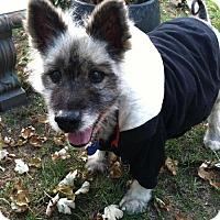 Adopt A Pet :: MURPHY - Southern California, CA