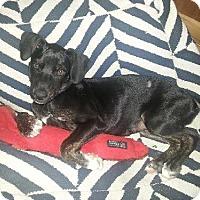 Adopt A Pet :: Jazmine - Del Rio, TX