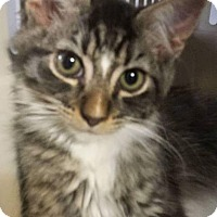 Adopt A Pet :: Bailey - Chandler, AZ