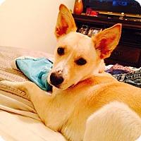 Adopt A Pet :: Cassie (fostered in NC) - Cranston, RI