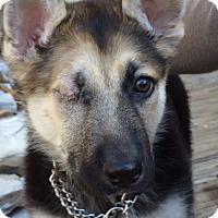 Adopt A Pet :: Jovie - Dripping Springs, TX