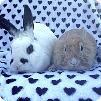 Adopt A Pet :: Thistle & Clover - Watauga, TX