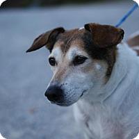 Adopt A Pet :: Chance - Pocahontas, AR