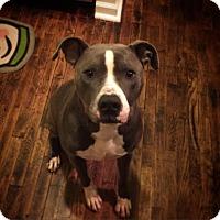 Adopt A Pet :: Rudy - Grand Rapids, MI