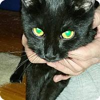 Adopt A Pet :: Venus - Rockford, IL
