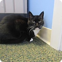 Adopt A Pet :: Abigail - Northfield, MN