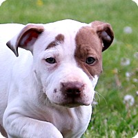 Adopt A Pet :: Lakota - Glastonbury, CT