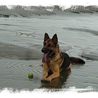Adopt A Pet :: Anton - Mill Creek, WA