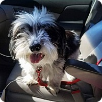 Adopt A Pet :: Bobbi - Bernardston, MA