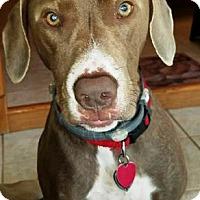 Adopt A Pet :: Winnie - Oswego, IL