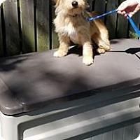Adopt A Pet :: Hope & Clyde - Pataskala, OH