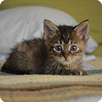 Adopt A Pet :: Jolie - Austin, TX