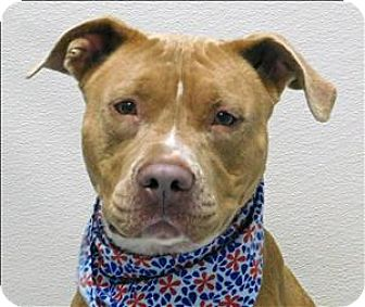 Pit Bull Terrier Mix Dog for adoption in Topeka, Kansas - Tigerlily