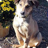 Adopt A Pet :: NILES - Westminster, CO
